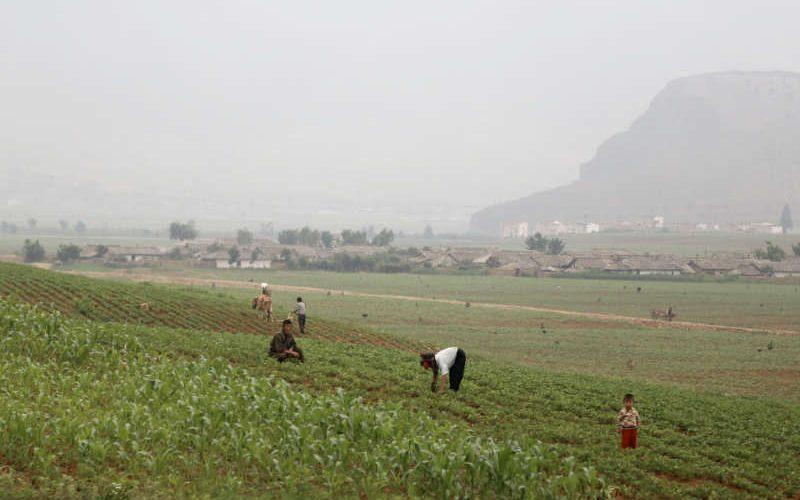 Grupuri de Creștini își folosesc Creativitatea pentru a duce Evanghelia în Coreea de Nord